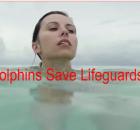 Dolphins Save Lifeguard