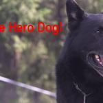 Sako The Dog Hero
